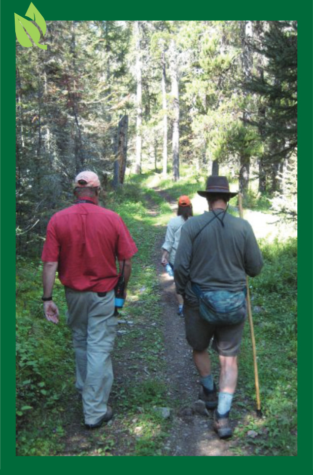Three people walking away on a forest path
